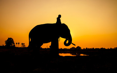 Why are elephants so hard to ride?